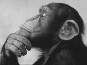 monkeythinks