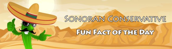 fun_fact_of_the_day_banner